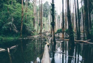 Une forêt primaire menacée par la déforestation.