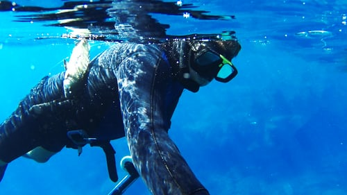 Un plongeur dans l'eau.